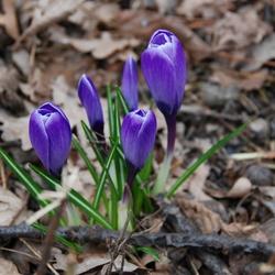 Spring time