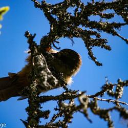 Vogel in natuurpark