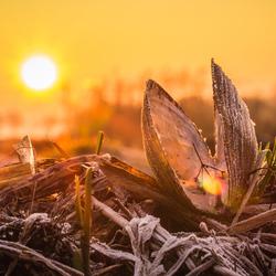 Zoetwatermossel bij zonsopkomst
