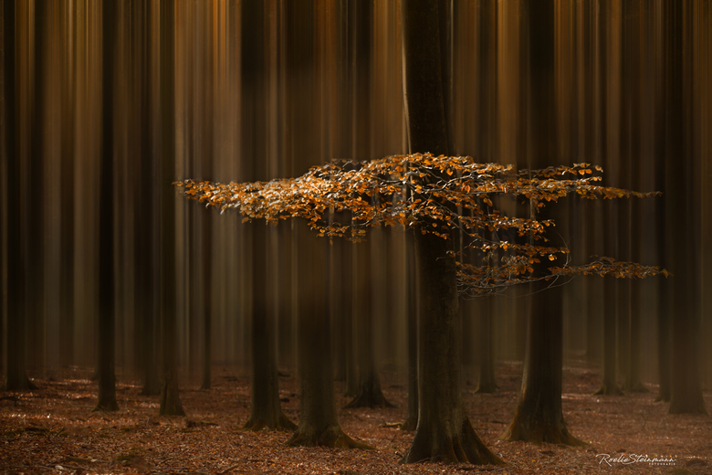 Lights of fall -