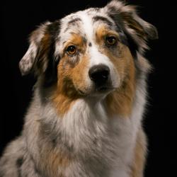hond studio