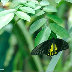 Vlinder Kuala Lumpur