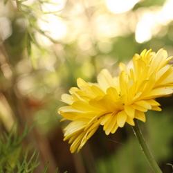 bloem tegenlicht