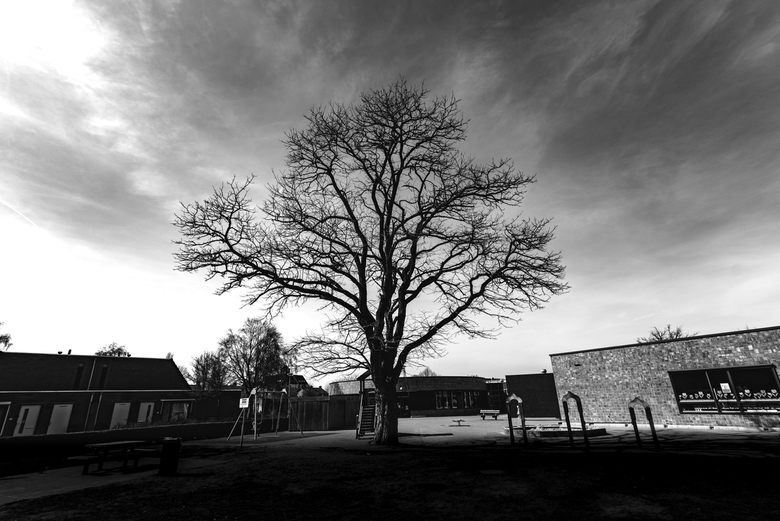 Urban Tree -