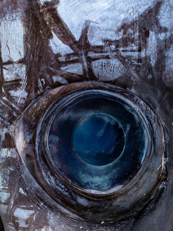 fisheye -