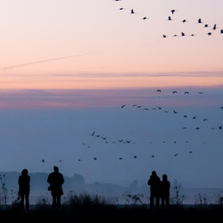 kraanvogels op le lac du Der, 2