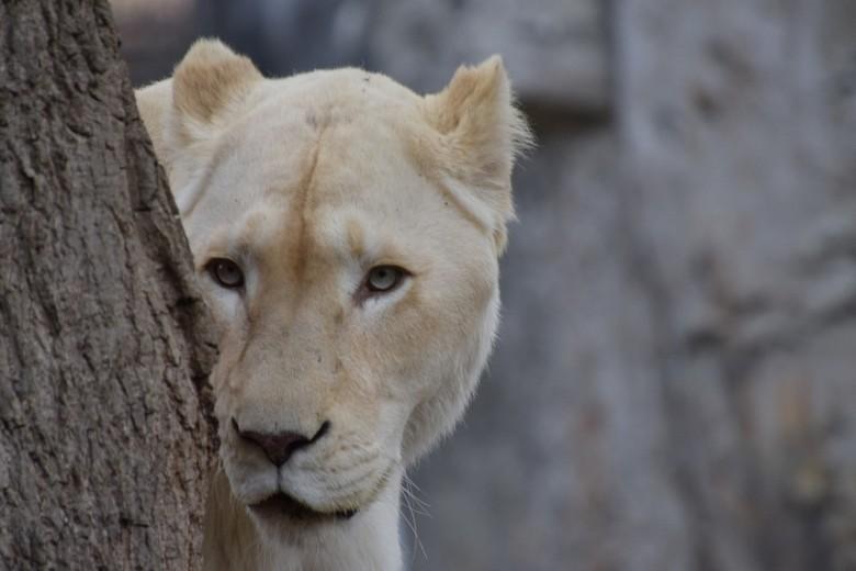 leeuwin -