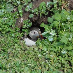 Papegaaiduiker in nestgang - door Jetze (8)
