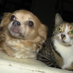 Mijn Chihuahua Vicky & mijn poesje Lulu samen op bank.