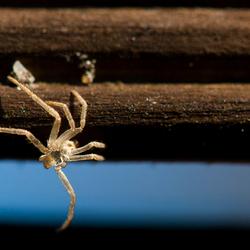 Spinnetje hangend aan de schutting