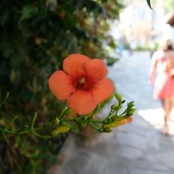 Fleurig Idyllisch Griekenland