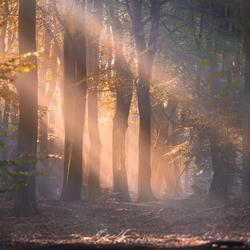De bomen en de mist