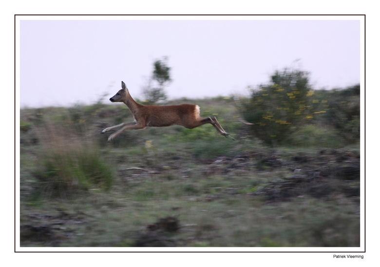 Jump - Even genoeg van de Zuid Afrika foto's. Ik woon tenslotte dicht bij de Posbank (Vanaf mijn werkkamer kan ik de Posbank zien liggen). Gerege