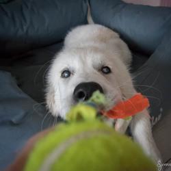 Mijn bal! Laat los!