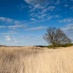 The tree pose - De Kampina - Boxtel
