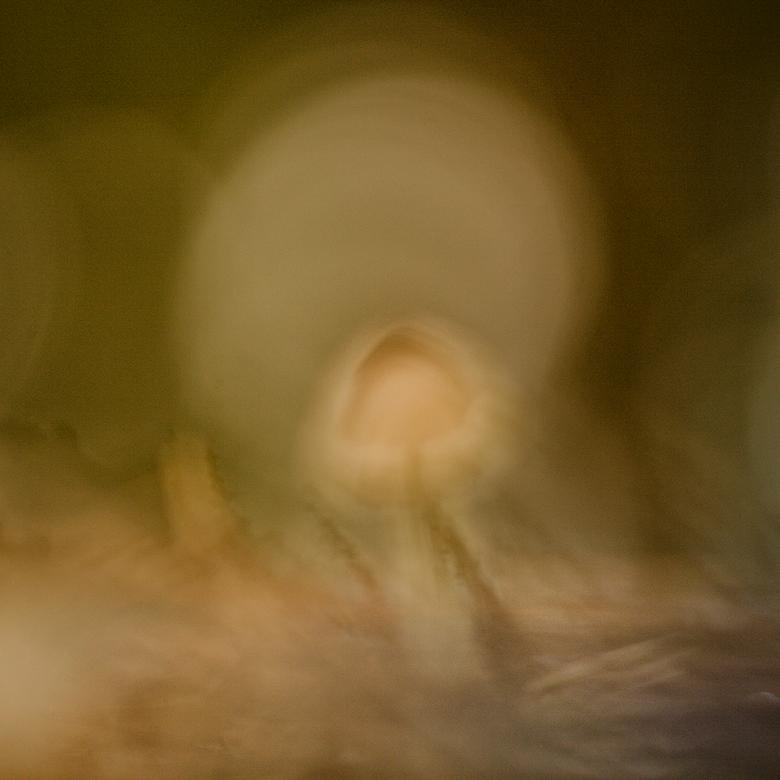 """Onscherp - Mijn lichtende voorbeeld Gertjan (<img  src=""""/images/smileys/wilt.png""""/> ), liet vorige week een compleet wazige foto zien. Ik vond het wel"""