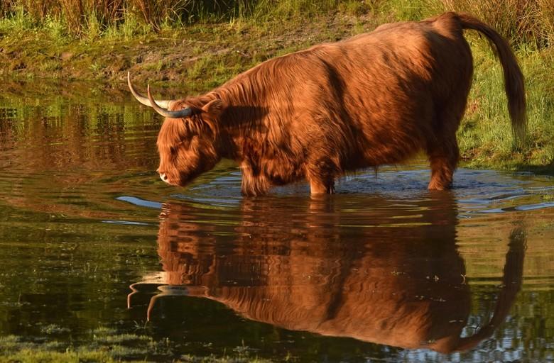 Pootje baden - In de avondzon na een warme dag.
