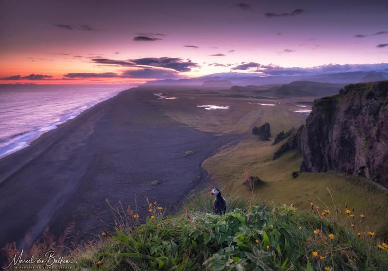 """Majestic Iceland and the puffin - Nog altijd bezig met killen van mijn darlings <img  src=""""/images/smileys/smile.png""""/> van laatste ijslandreis. Deze"""