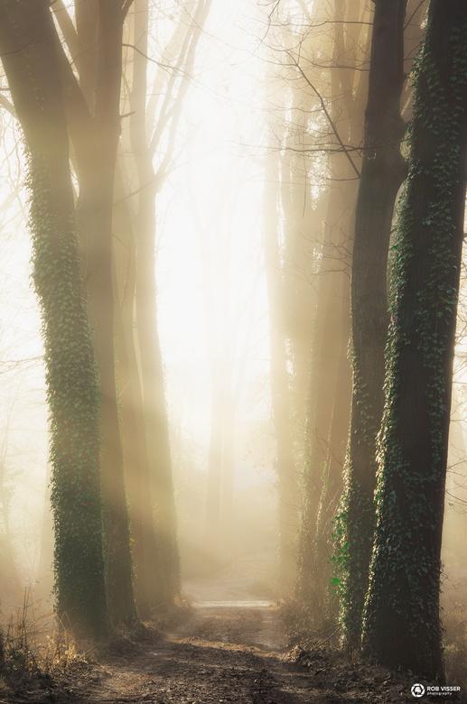 Pillars of light