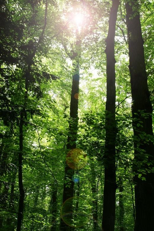 licht in donker bos - hoe mooi het kan zijn om de zon is recht in je lens zonder UV filter te laten kijken. zeker bij een goede lens blijven de kleure