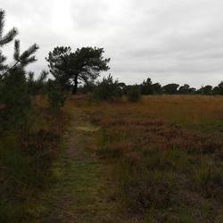 Kalmthoutse Heide