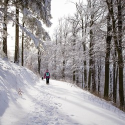 Wandelen in winter wonderland