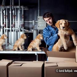 Puppyfabriek