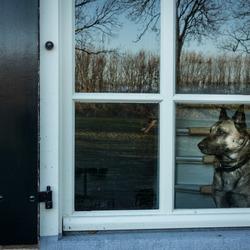 Markiezaatsmeer - Hondenleven