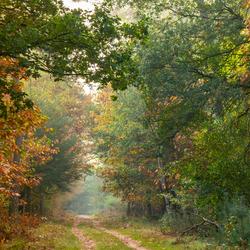 Het bos in al zijn glorie
