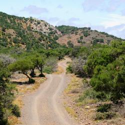 Typisch Afrikaans landschap