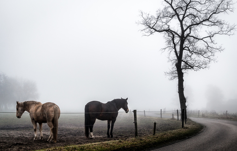 Paarden in de mist