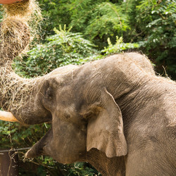 olifant dierenpark Amersfoort