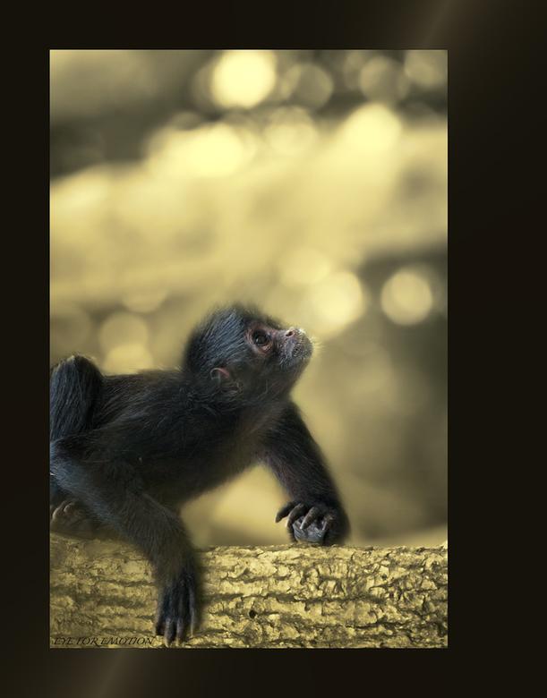 Aapje.. - Ben niet zo van de apen, en daarmee bedoel ik dat ik er niet zo goed in ben om ze leuk vast te leggen. En omdat ik ze meestal samen met Geer