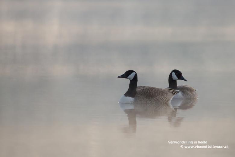 canadezen in de mist