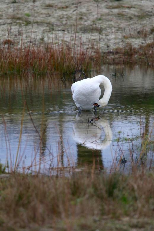 Spiegelbeeld -