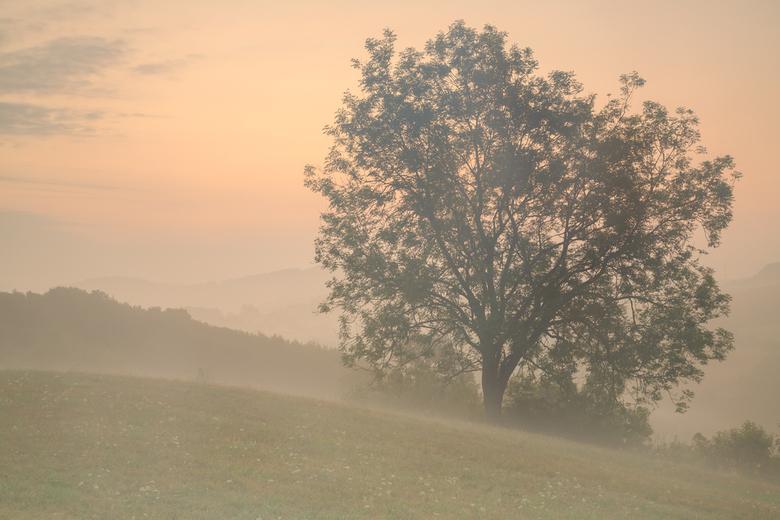 Pencil Tree - Vroeg ochtend net boven het dorpje Pelm in de Eifel. Het viel me op dat de takken heel goed zichtbaar waren. De type boom ken ik niet. M