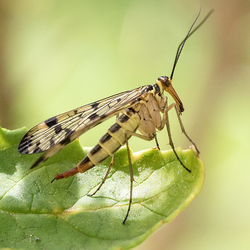 insect op blad
