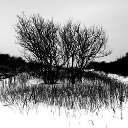 Winterduinen