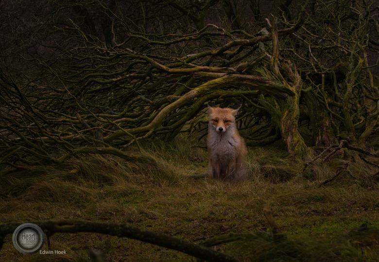 fox 3