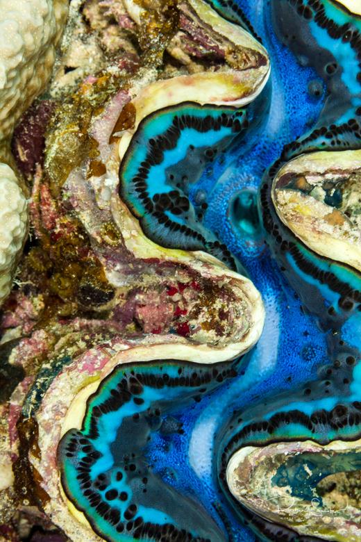 Bi-valve rivier abstract - onderwater