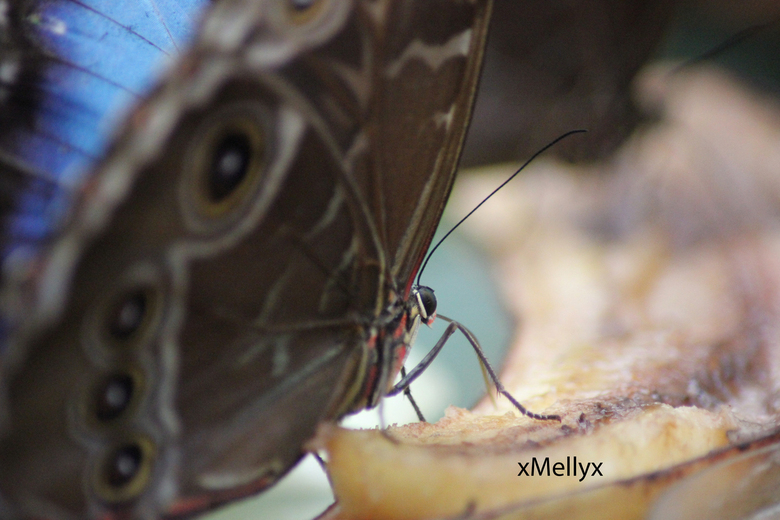 Butterfly - De vlinder is aan het genieten van het voedsel dat er ligt