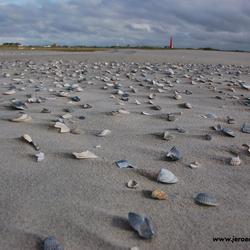 De schelpen op het strand