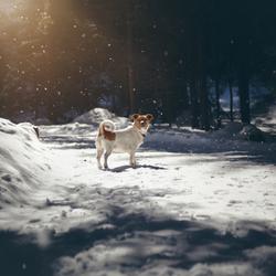 Kwispel enjoying the snow!