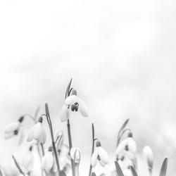De lente in zwart/wit