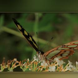 Nectar Smullen
