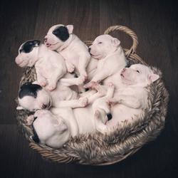Mandje vol met puppies
