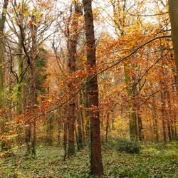 herfstkleuren in het Geversduin