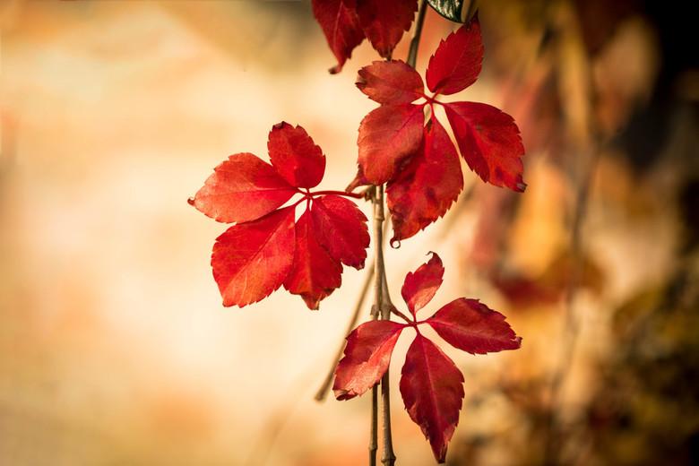 Herfst - Herfstkleurtjes