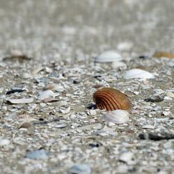 Lekker lui in het zand.....