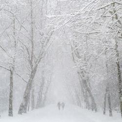 Vondelpark snow